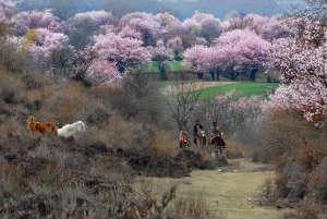Тибет. Цветущая долина