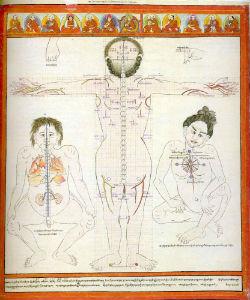Атлас тибетской медицины 10