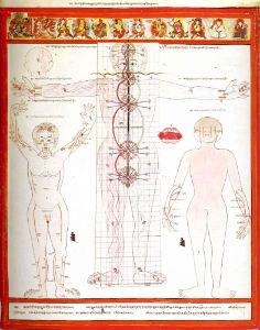 Атлас тибетской медицины 12