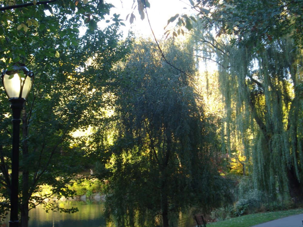 растения ботанического сада фото с названиями