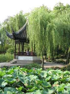 Ива в китайском дворике