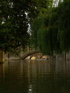 Ива. Кембридж. Англия